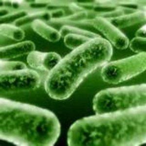 Productos biologicos tratamiento del agua